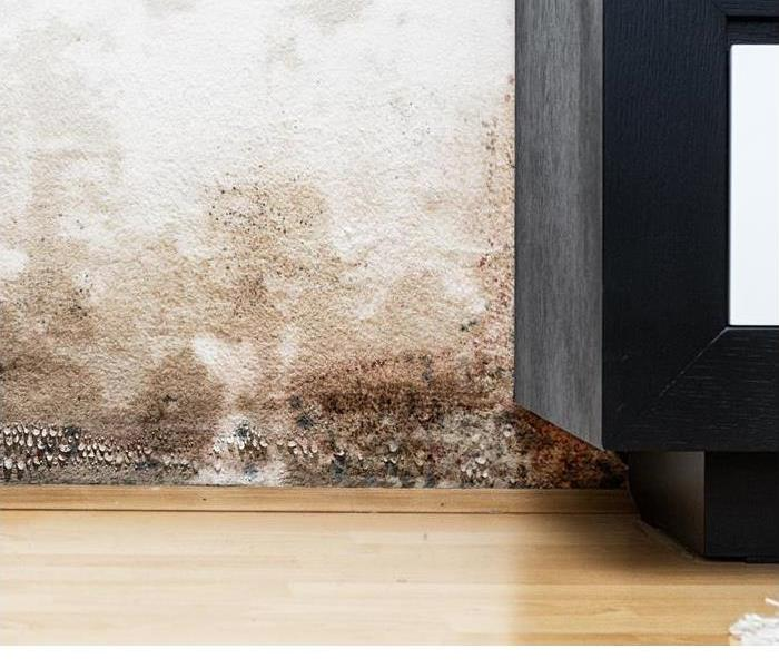 Mold Remediation 3 Differences Between Mold and Mildew