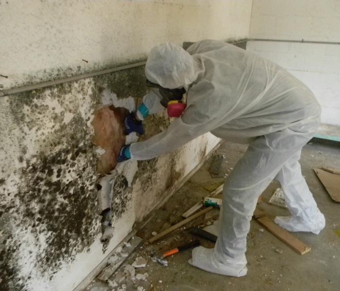 Mold Remediation Got Mold? Let SERVPRO of North Hollywood take the load off your shoulders.