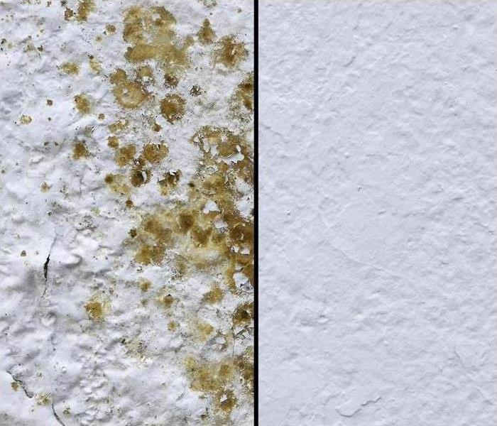 Mold Remediation What You Shouldn't Do When You Find Mold in Your Home