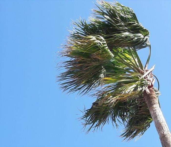 Palm tree on a windy day