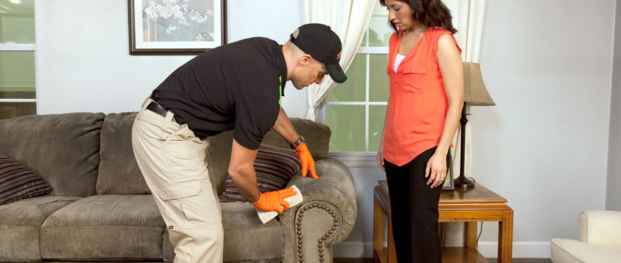 North Hollywood, CA carpet upholstery cleaning